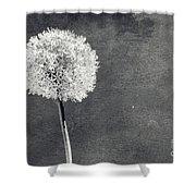 Vintage Allium Flower Shower Curtain
