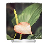 Vintage Anthurium Shower Curtain