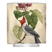 Vintage Bird Study-d Shower Curtain