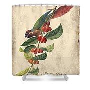 Vintage Bird Study-h Shower Curtain