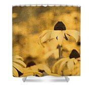 Vintage Black-eyed Susans Shower Curtain