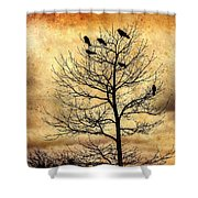 Vintage Blackbirds On A Winter Tree Shower Curtain