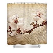 Vintage Blossoms Shower Curtain
