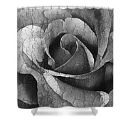 Vintage Cracked Rose Shower Curtain