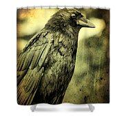 Vintage Crow Shower Curtain