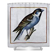 Vintage English Sparrow Square Shower Curtain