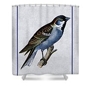 Vintage English Sparrow Vertical Shower Curtain