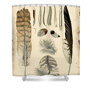 Vintage Feather Study-a Shower Curtain