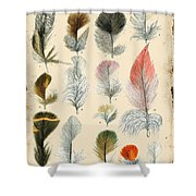 Vintage Feather Study-b Shower Curtain