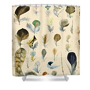 Vintage Feather Study-c Shower Curtain