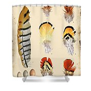 Vintage Feather Study-d Shower Curtain