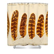 Vintage Feather Study-g Shower Curtain