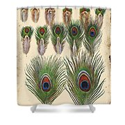 Vintage Feather Study-jp2084 Shower Curtain