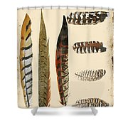 Vintage Feather Study-jp2085 Shower Curtain