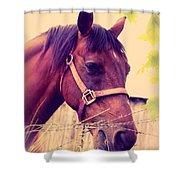 Vintage Horse Shower Curtain