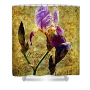 Vintage Iris Shower Curtain