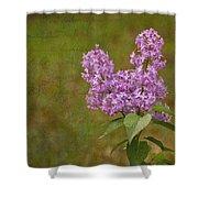 Vintage Lilac Bush Shower Curtain