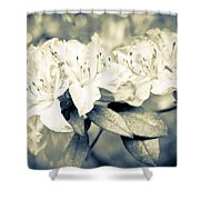 Vintage Rhododendron Spring Shower Curtain