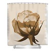 Vintage Rose 2013 Shower Curtain