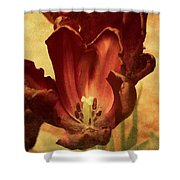 Vintage Tulips Shower Curtain