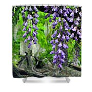 Vintage Wisteria 200 Shower Curtain