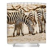 Vintage Zebras Shower Curtain