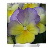 Viola Beauty Shower Curtain