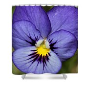 Viola Named Sorbet Blue Heaven Jump-up Shower Curtain by J McCombie