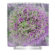Violet And Green Shower Curtain