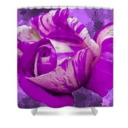 Violet And White Rose Shower Curtain by Bruce Nutting