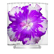 Violet Appaloosa Shower Curtain