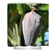 Violet Banana Blossom Shower Curtain
