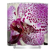 Violet Beauty Shower Curtain