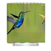 Violet-bellied Hummingbird Shower Curtain
