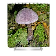 Violet Cortinarious -cortinarious Violaceus Mushroom On Mossy Log Shower Curtain