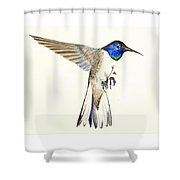 Violet Crowned Hummingbird Shower Curtain