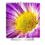 Violet Flower Macro Shower Curtain