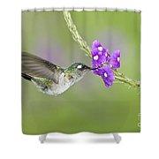 Violet-headed Hummingbird Shower Curtain