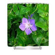 Violet Herbaceous Periwinkle Shower Curtain