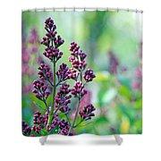 Violet Lilacs Budding Shower Curtain