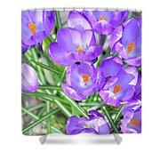 Violet Lilies Shower Curtain