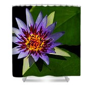 Violet Lily Shower Curtain