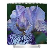 Violet Lines Shower Curtain