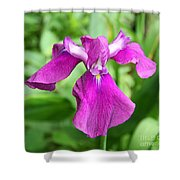 Violet Moment Shower Curtain