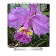 Violet Orchid Shower Curtain