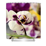 Violet Orchids Brushed With Gold Shower Curtain