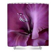 Violet Passion Gladiolus Flower Shower Curtain