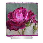 Violet Red Rose Shower Curtain