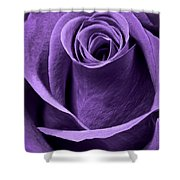 Violet Rose Shower Curtain by Adam Romanowicz