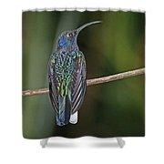 Violet Saberwing Shower Curtain